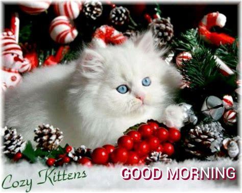 christmas good morning images  pinterest christmas  christmas kitten