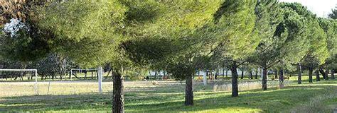 bureau d 騁ude environnement montpellier les espaces verts montpellier ville verte ville de