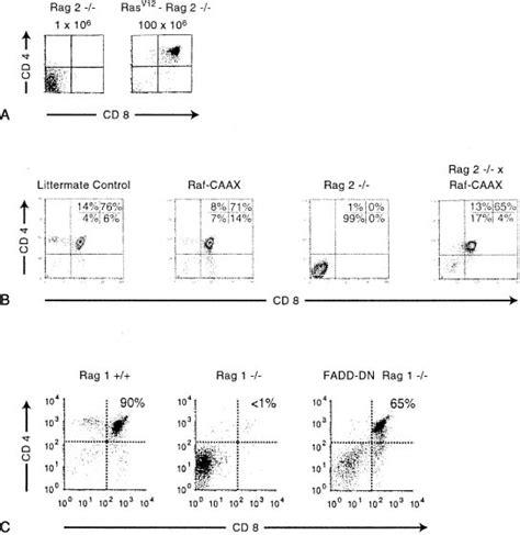 xsl decimal pattern fundamental immunology
