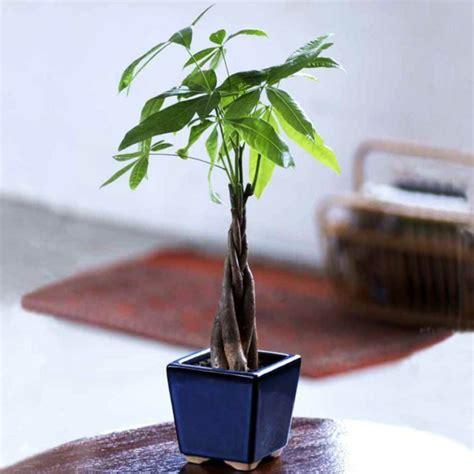 passende zimmerpflanzen bestimmen und pflegen - Kleine Zimmerpflanzen