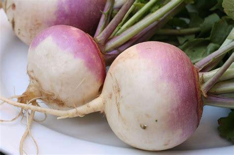skinned root vegetable turnip