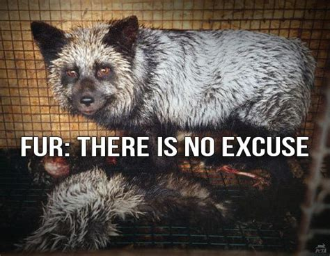 According To Peta All Animal Skin Is The Same by 456 Best Say No To Products Of Animal Testing And Fur