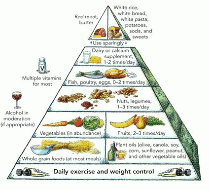 carbohydrates for elderly healthy food pyramid