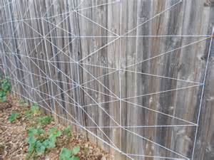 privacy fence trellis diy cucumber trellis on privacy fence coffee to compost