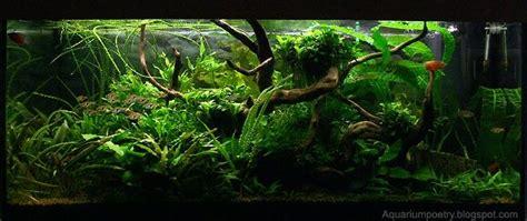 best low light aquarium plants my aquarium scapes 180 l planted low light aquarium