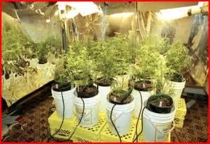 Indoor Spice Garden Kit - marijuana seeds medicinal marijuana hydroponics marijuana hydroponics systems co
