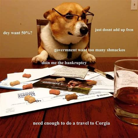 Accountant Dog Meme - 51 fire memes to make you laugh funny gallery ebaum s