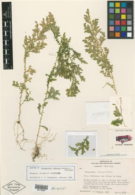 libro el herbario de las c 243 mo hacer un herbario plantas flor de planta flor de planta