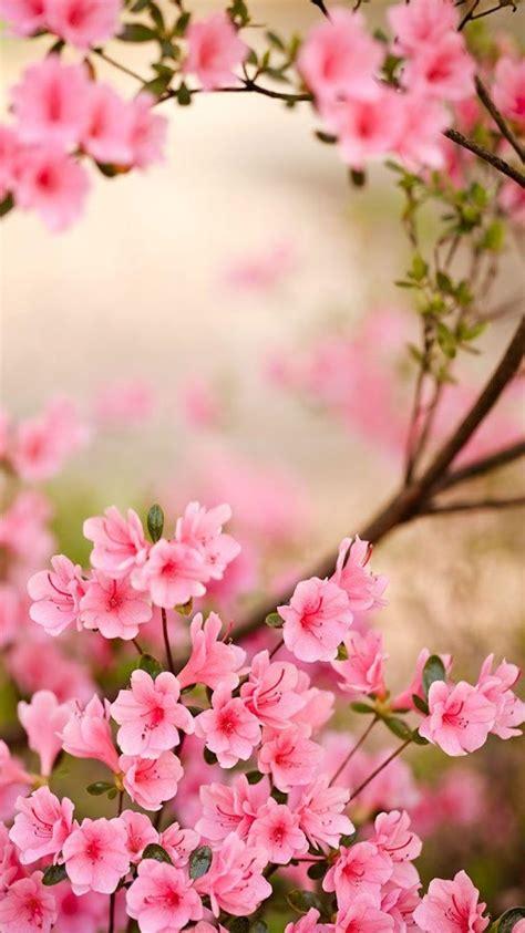 wallpaper para whatsapp rosado fondos para whatsapp de flores im 225 genes wallpappers