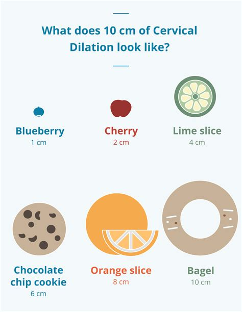 cervix diagram during pregnancy dilation sizes gallery