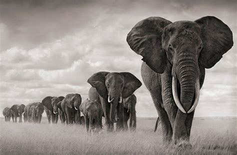 Eleps Top beautiful black and white photography of animals hongkiat