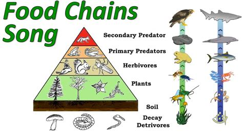 Food chains youtube