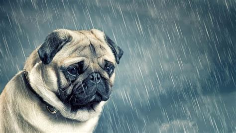 depressed puppy depressed pets how to help a with depression top tips