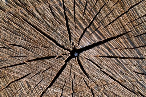 Free picture: tree, texture, nature, fissure, macro, brown