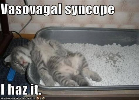 syncope in dogs vasovagal syncope kitten vasovagal syncope