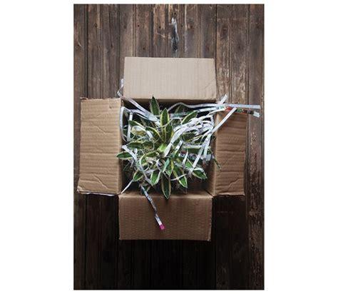 mail order nursery plants thenurseries