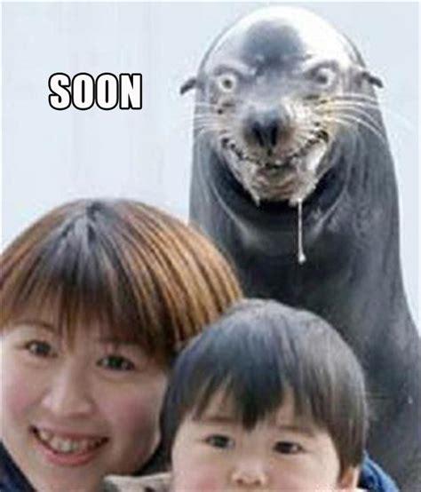 Soon Meme - 30 funny quot soon quot meme pics