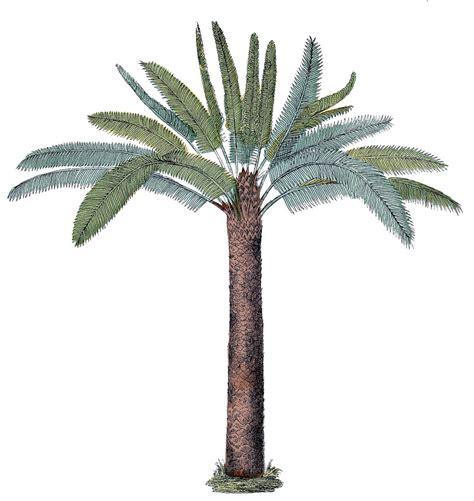 vintage palm tree graphic  graphics fairy