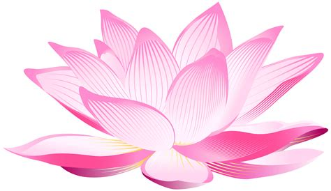 png lotus flower transparent lotus flower png images