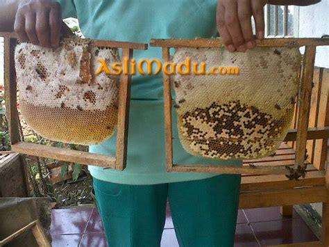 Madu Randu Kemasan 5kg jual madu dalam sarang