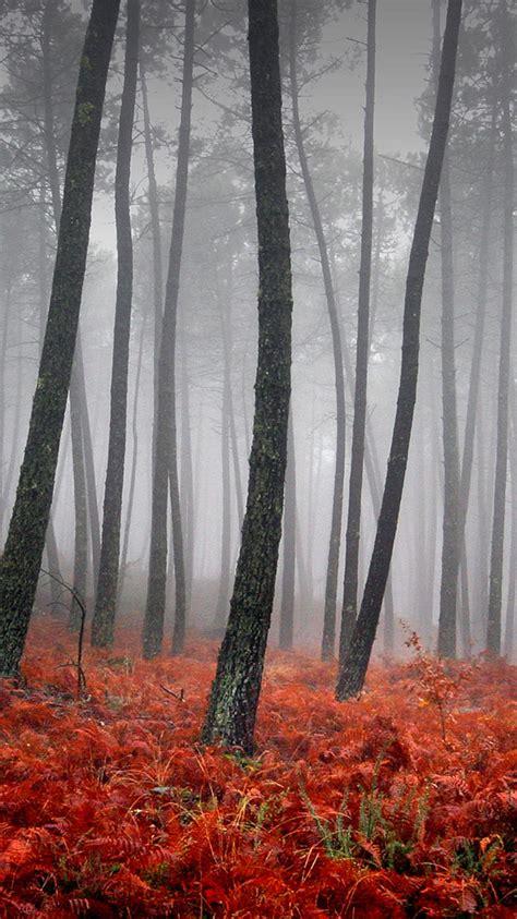 breath    beautiful fall wallpaper