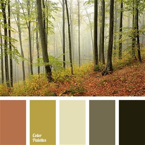 forest and forests on