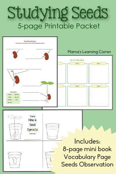 printable seed journal studying seeds printable mini book seed chart and