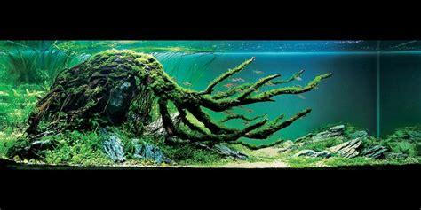aquarium design usa 17 best images about fish tank planter on pinterest
