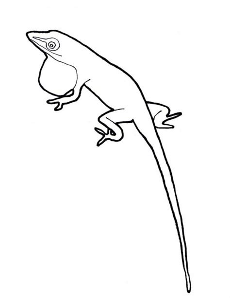 anole lizard coloring page coloring pages lizard coloring home