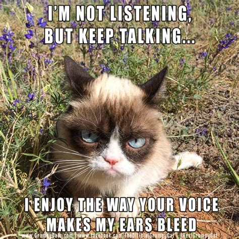 Not Listening Meme - grumpy cat on twitter quot i m not listening but keep