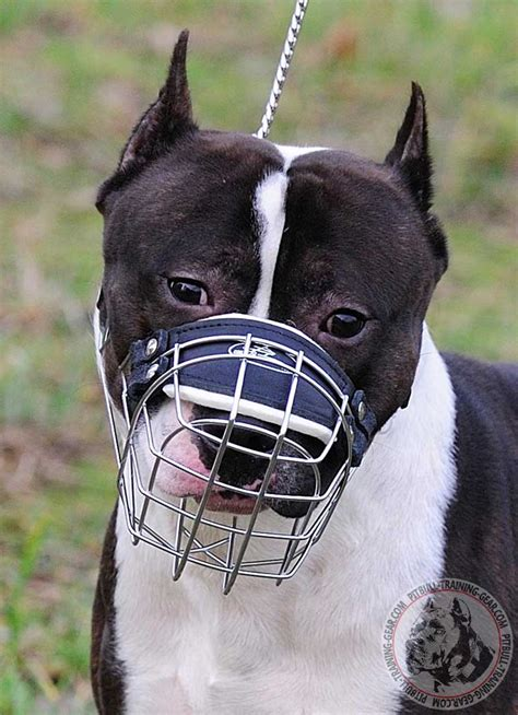 muzzle for pitbull buy adjustable wire basket pitbull muzzle gear