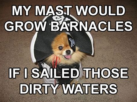 Sexually Inappropriate Memes - the 10 best inappropriate sexual innuendo dog that dresses