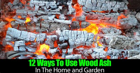 12 ways that plants can improve your life kirn radio iran 12 ways to use wood ash in the home and garden