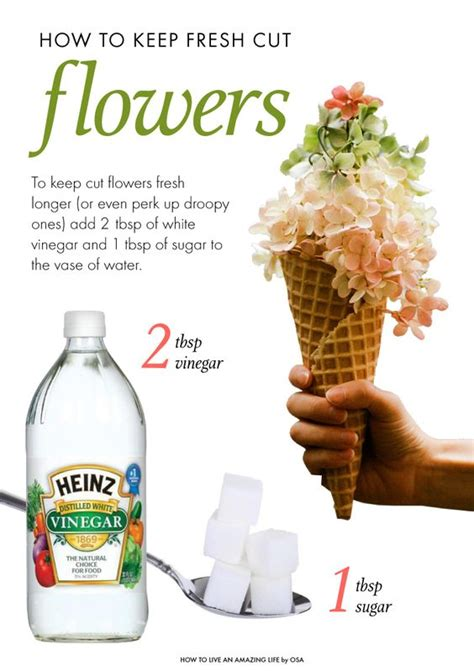 diy flower food to keep your flowers fresh hymns and verses how to keep flowers fresh after they re cut diy
