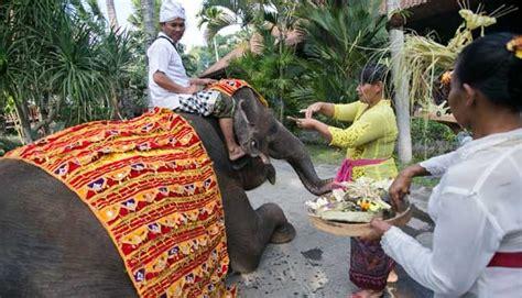 Tumpek Kandang Buku Bali Hindu bali zoo gelar selamatan untuk satwa nasional tempo co