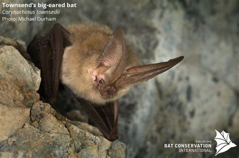 25 b 228 sta bat conservation international id 233 erna p 229