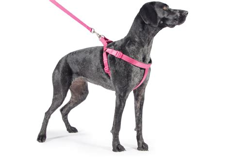 halter for dogs ancol black padded harness