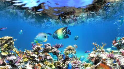 Fish Aquarium Live Wallpaper Free For Pc