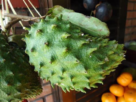 fruit 10 malaysia file malaysian fruits 10 jpg wikimedia commons