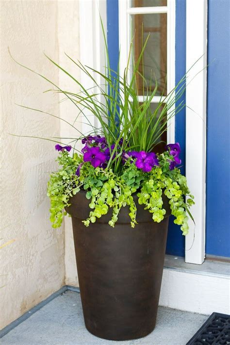 Front Door Potted Plants 25 Best Ideas About Front Door Planters On Front Door Plants Outdoor Planters And