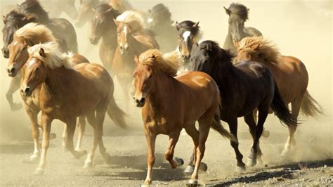 how many breeds are there how many breeds of horses are there reference