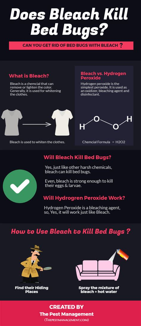 what chemicals do exterminators use for bed bugs does bleach kill bed bugs and their eggs with infographic