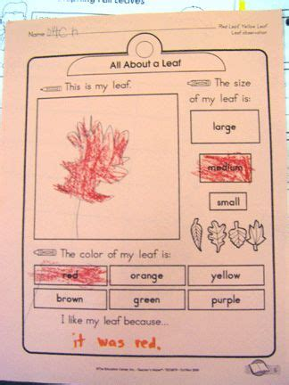 Kindergarten Activities With Leaves   completing a leaf report pinned by pediastaff visit