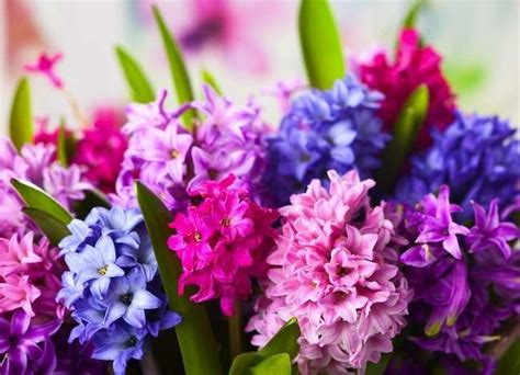 spring floral spring flowers 7 beautiful bulbs that bloom early bob vila