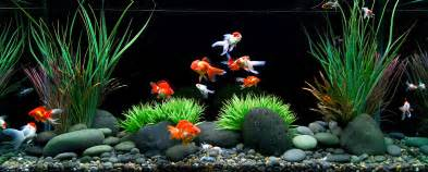 Best plants and substrate for beginner planted goldfish aquarium