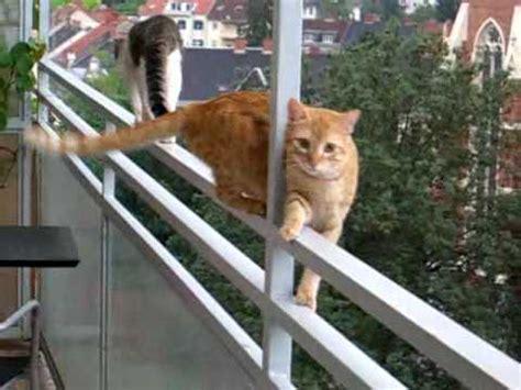 Really crazy cats !!!   YouTube