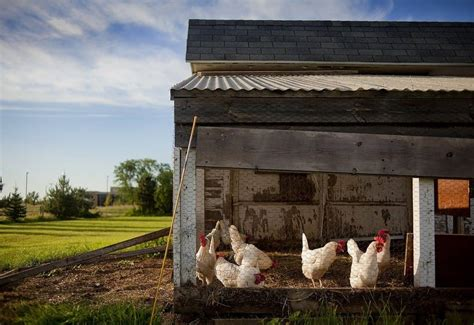 55 best chicken coops for practical farming my