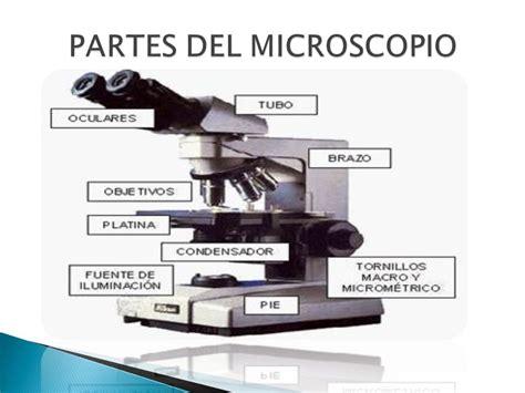 imagenes reales y virtuales en un microscopio optico el microscopio compuesto ppt descargar