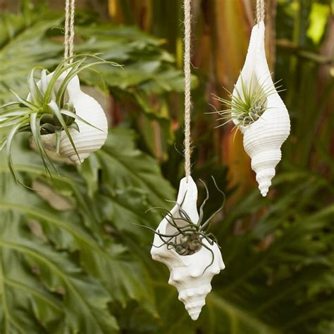 west elm hanging planter hanging shell planter style indoor pots and planters by west elm