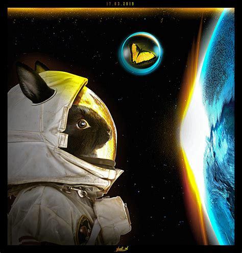 bunny  space photoshop artwork  art